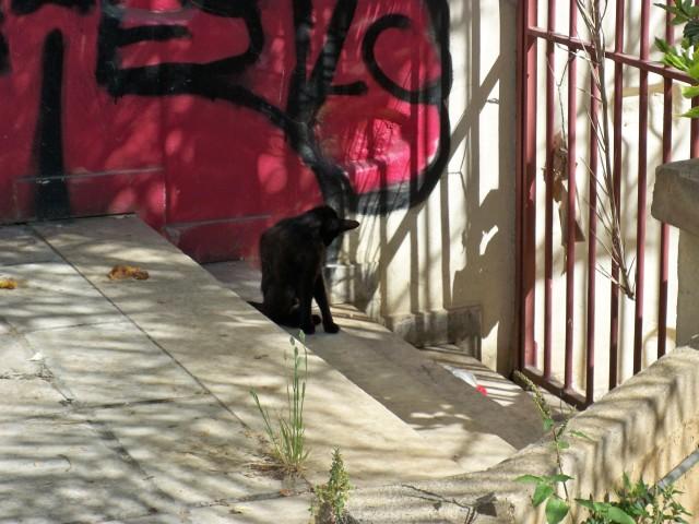 Южные кошки худые и страшные